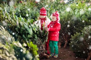 Little girls looking at Christmas trees